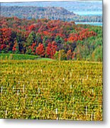 Grand Traverse Winery In Autumn Metal Print