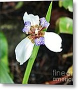 Grande Iris Metal Print by Craig Wood