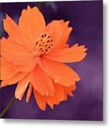 Grape Creamsicle Metal Print