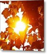 Grape Leaves Background Metal Print