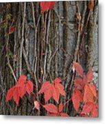 Grape Leaves On Column Metal Print