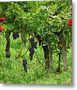 Grape Vines And Roses I Metal Print