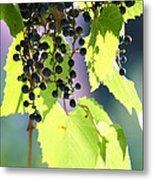 Grapes And Leaves Metal Print