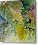 Grapes II Metal Print by Judy Dodds