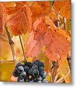 Grapes On The Vine - Vertical Metal Print