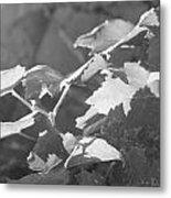 Grapevine In Morning Light Metal Print