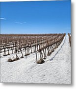 Grapevines In Snow Metal Print