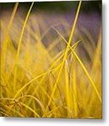 Grass Abstract 3 Metal Print