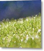 Grass, Close-up Metal Print by Tony Cordoza