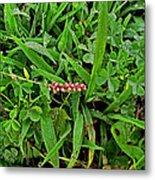 Grass Drops II Metal Print