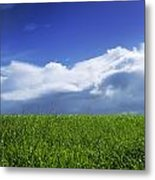 Grass In A Field, Ireland Metal Print by The Irish Image Collection