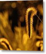 Grass In Golden Light Metal Print