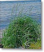 Grass On The Beach Metal Print