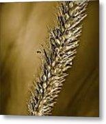 Grass Seedhead Metal Print
