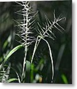 Grass Seeds In The Morning Light Metal Print