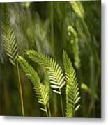 Grass Stems And Seed No.2129 Metal Print