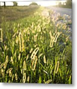 Grasses On A Nebraska Farm Metal Print