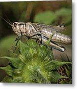 Grasshopper Metal Print