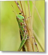 Grasshopper In Green Metal Print