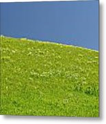 Grassy Slope View Metal Print