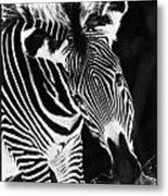 Gravy Zebra Metal Print
