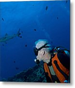 Gray Reef Shark With Diver, Papua New Metal Print by Steve Jones