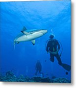 Gray Reef Shark With Divers, Papua New Metal Print by Steve Jones