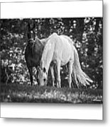 Grazing In Black And White Metal Print