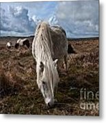 Grazing The Moor Metal Print