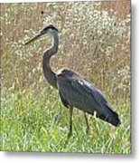 Great Blue Heron - Ardea Herodias Metal Print