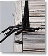Great Blue Heron - Foundation Metal Print