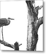Great Blue Heron - Dead Pine Metal Print