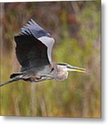 Great Blue Heron In Flight II Metal Print