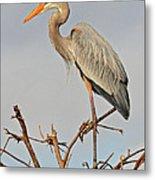 Great Blue Heron In Habitat Metal Print