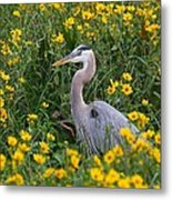 Great Blue Heron In The Flowers Metal Print