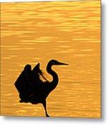 Great Blue Heron Landing In Golden Light Metal Print