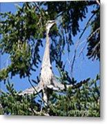 Great Blue Heron Meditation Pacific Northwest Metal Print