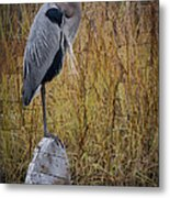 Great Blue Heron On Spool Metal Print by Debra and Dave Vanderlaan