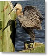 Great Blue Heron On The Block Metal Print