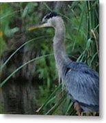 Great Blue Heron Painterly Metal Print