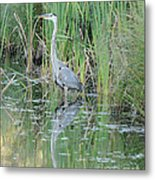 Great Blue Heron With Reflection Metal Print
