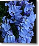 Great Blue Lobella Metal Print