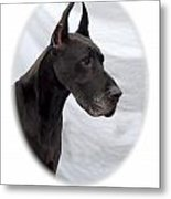 Great Dane 189 Metal Print