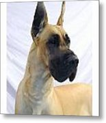 Great Dane 253 Metal Print