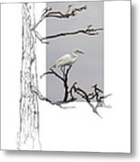 Great Egret - Gnarled Tree Metal Print
