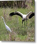 Great Egret And Wood Stork In The Marsh Metal Print