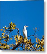 Great Egret On Watch Metal Print
