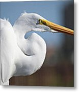 Great Egret Portrait Metal Print