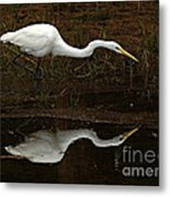 Great Egret Reflection 2 Metal Print