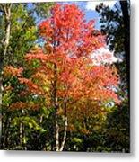 Great Fall Tree Metal Print